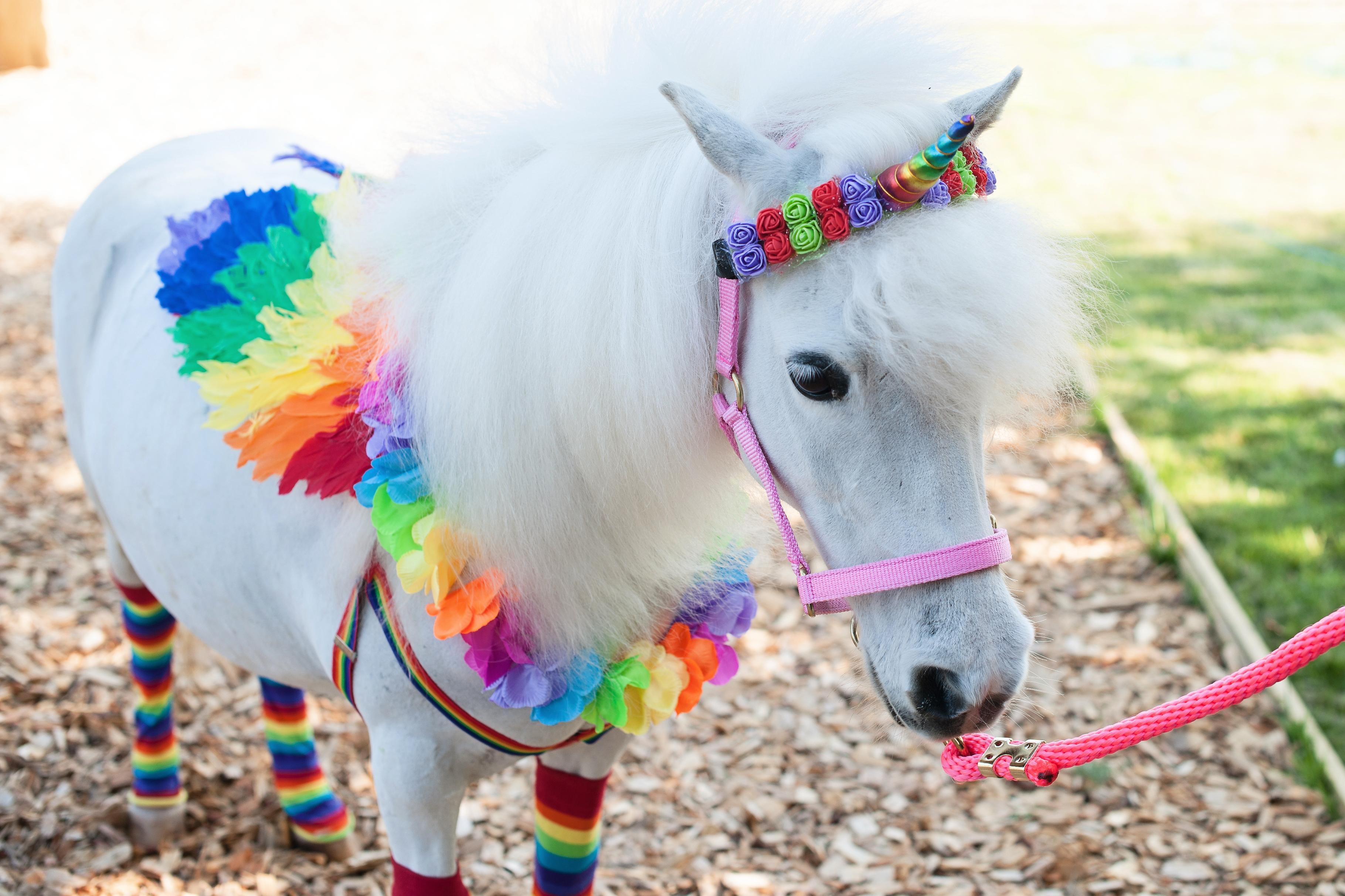 unicorn-25