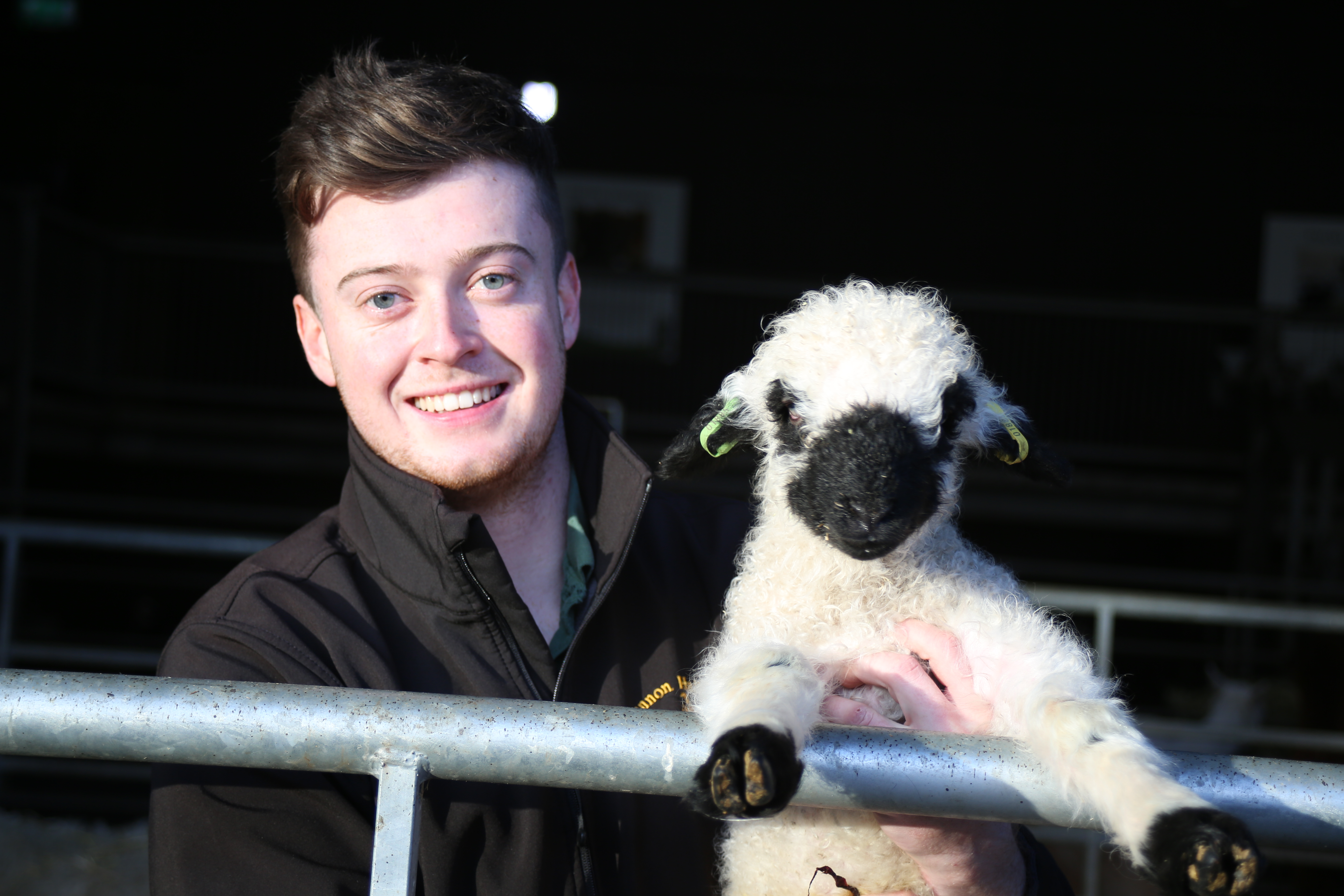 Farmer Alex and Valais black nose lamb