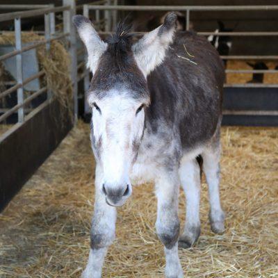 Gary the Donkey