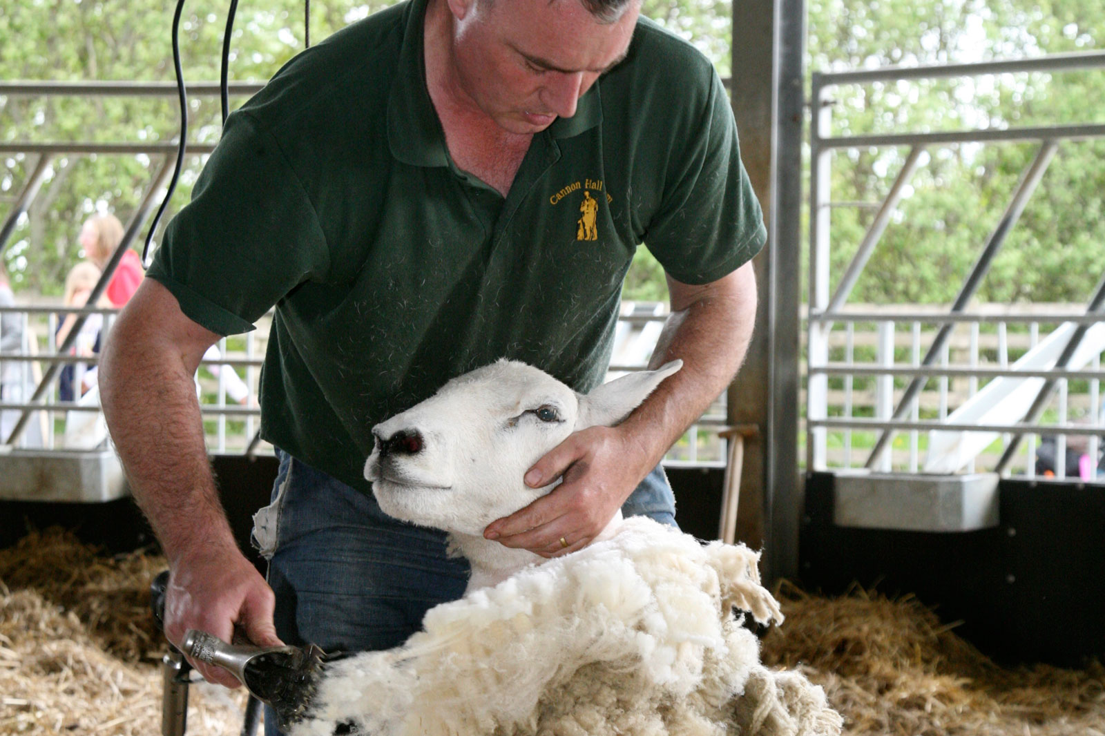 Shearing- Dave High-Def