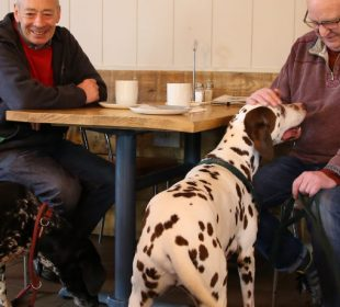 The Lucky Pup Dog Friendly Cafe