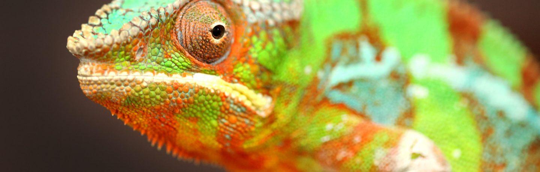 Reptile Talk
