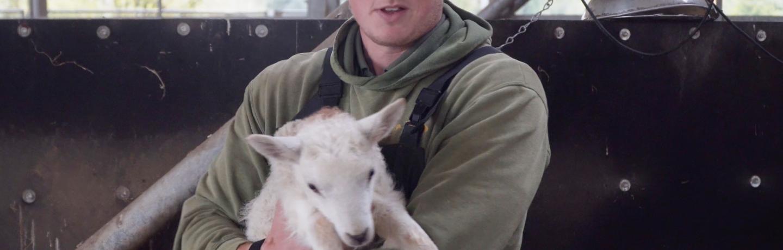 Farmer Tom and the Lamb