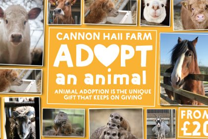 Cannon Hall Farm - Adopt an animal - animal adoption os the unique gift that keeps on giving