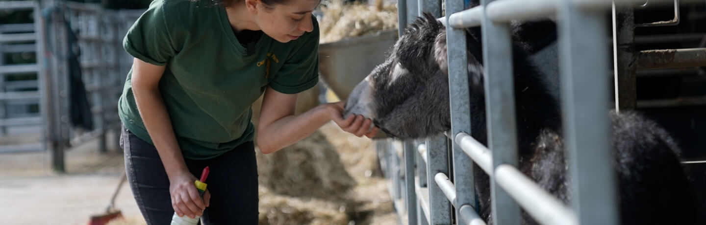A photo of Kate petting Princess the Donkey at Cannon Hall Farm